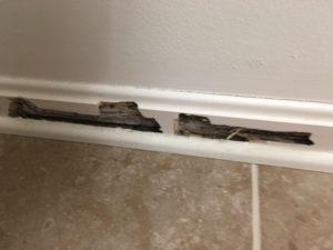termite damage to baseboard