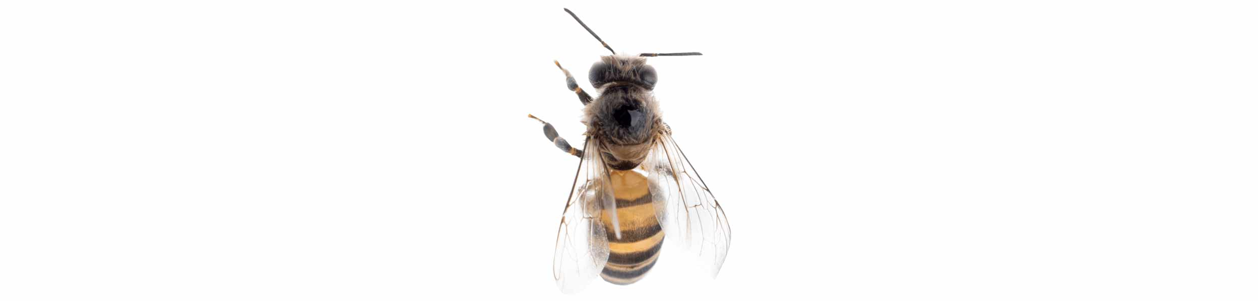 ACE Exterminating-Pest-Control-Bee-Header