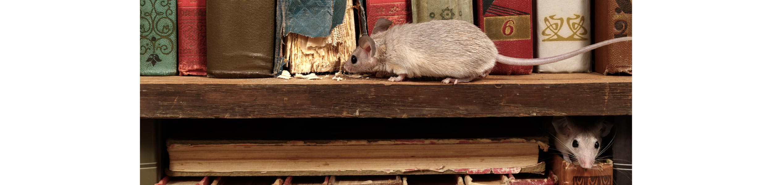ACE Exterminating-Pest-Control-Rodents-Mouse-Rat-Damge-Eating-Books-Header