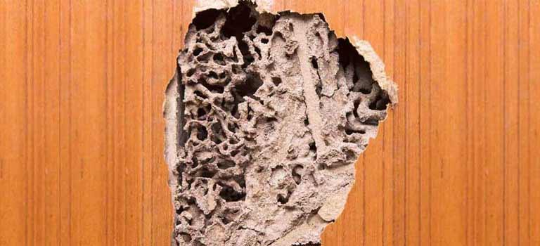 ACE Exterminating-Pest-Control-Termite-Infestation-Damage-Slider-Tablet