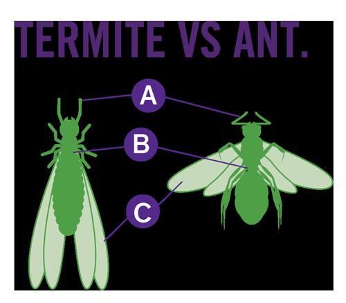 OPC Pest Control - Termite Vs Ant