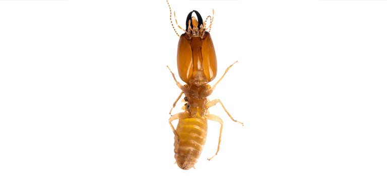 ACE Exterminating-Pest-Control-Termites-Slider-Tablet