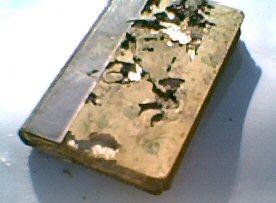 termite damage to book